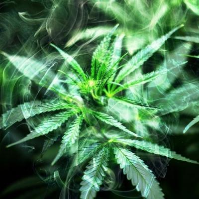 Germinating Cannabis seeds: FAQ