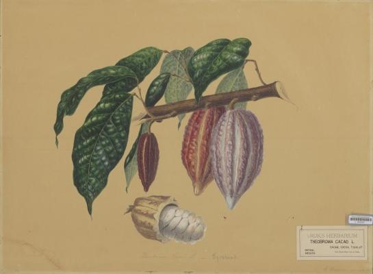 User Report: Bionix Cocoa Power