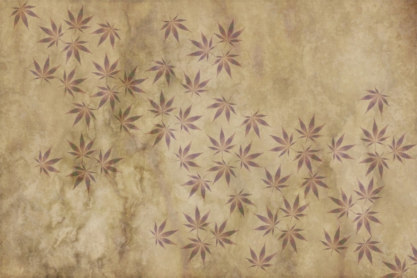 Tips for the best cannabis plants in 2021