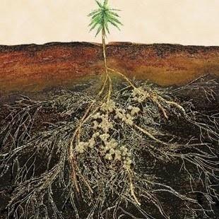 Organic Cannabis Growing