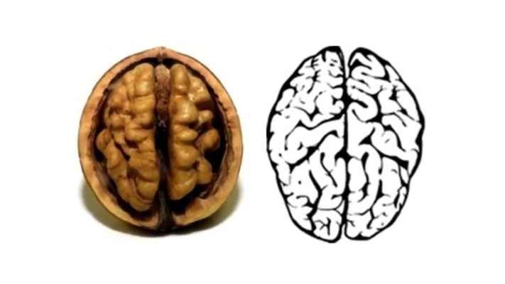 Psilocybin and Lion's Mane: Healthy brain