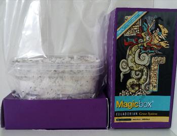 Magic Mushroom Growkit: Step By Step | Sirius nl